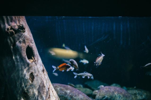 national-aquarium-10-of-23