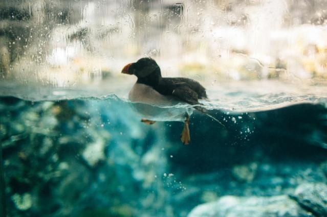 national-aquarium-12-of-23