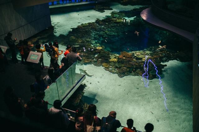 national-aquarium-6-of-23